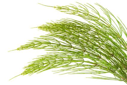 naturalne zioła i ekstrakty roślinne